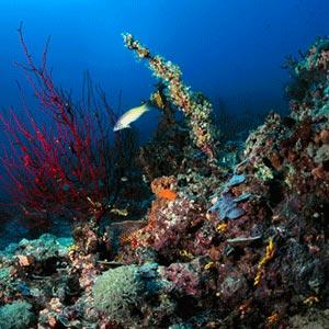 The sea floor around Papua New Guinea. Photo: Anderson Smith